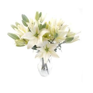 different types of lilies  lilies flowers, Beautiful flower